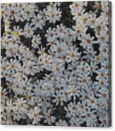 Painted White Daisies Canvas Print