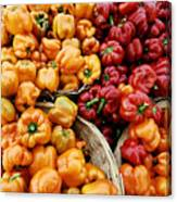 Painterly Peppers Canvas Print