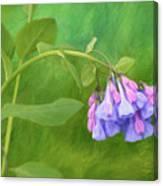 Painterly Virginia Bluebells Canvas Print