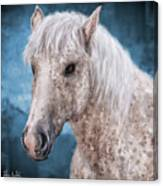 Painting Of A Brindle Horse With White Coat Canvas Print