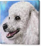 Painting Of A White Fluffy Poodle Smiling Canvas Print