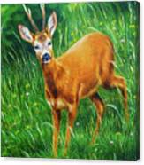 painting of young deer in wild landscape with high grass. Eye contact. Canvas Print