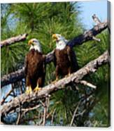 Pair Of American Bald Eagle Canvas Print