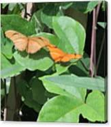 Pair Of Butterflies Canvas Print