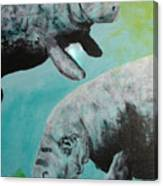 Pair Of Florida Manatees Canvas Print