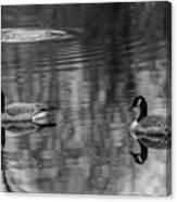 Pair Of Geese, Nisqually National Wildlife Refuge, Washington, 2016 Canvas Print