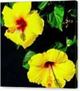 Pair Of Golden Hibiscus In Morning Sun Canvas Print
