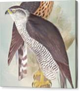 Pair Of Goshawks Canvas Print