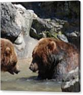 Pair Of Grizzly Bears Wading In A Shallow River Canvas Print