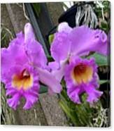 Pretty Purple Orchids Canvas Print