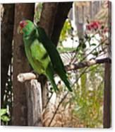Pair Of Parrots Canvas Print