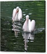 Pair Of Pelicans Canvas Print