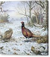 Pair Of Pheasants With A Wren Canvas Print