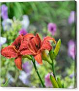 Pair Of Red Asiatic Lilies After A Rain Canvas Print