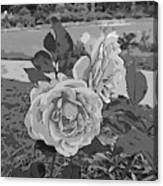 Pair Of Roses In Grayscale Canvas Print
