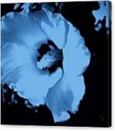 Pale Blue Tinge Hibiscus Flower Canvas Print
