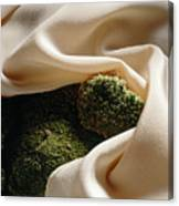 Pale Orange Silk And Moss Canvas Print