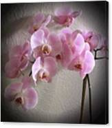 Pale Pink Orchids B W And Pink Canvas Print