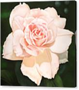 Pale Pink Rose Canvas Print