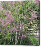 Pale Pink Spring Canvas Print