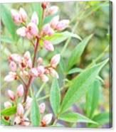 Pale Powder Pink Plant Canvas Print