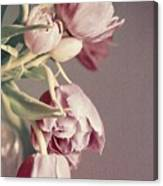 Pale Tulips Canvas Print