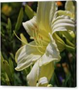 Pale Yellow Lily In A Garden Of Daylilies Canvas Print