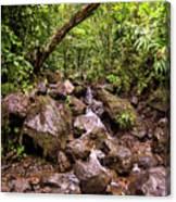 Palikes Stream Along Trail Canvas Print