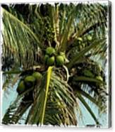 Palm 1 Canvas Print