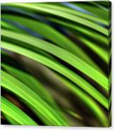 Palm Abstract By Kaye Menner Canvas Print