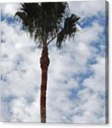 Palm And Clouds Canvas Print
