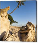 Palm And Driftwood Canvas Print