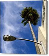 Palm And Streetlight Canvas Print