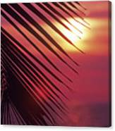 Palm At Sunset Canvas Print