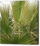 Palm Bush Canvas Print