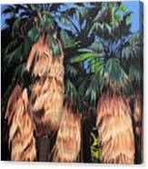 Palm Canyon Entrance Canvas Print