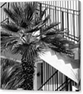 Palm Chevron Palm Springs Canvas Print