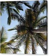 Palm Collection - Standing Tall Canvas Print