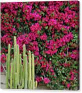Palm Desert Blooms Canvas Print