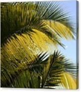 Palm Detail Canvas Print