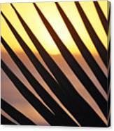Palm Frond Detail Canvas Print