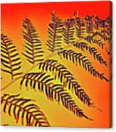 Palm Frond In The Summer Heat Canvas Print