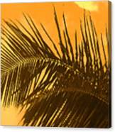 Palm Frond Sunset Canvas Print
