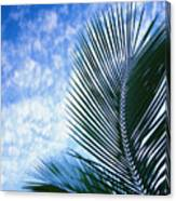 Palm Fronds And Clouds Canvas Print