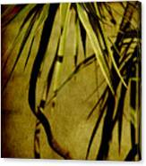 Palm Fronds Are Green Canvas Print