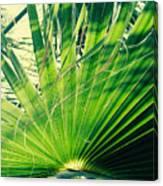 Palm House Branch Canvas Print