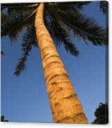 Palm In Blue Sky Canvas Print