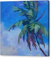 Palm In Evening Light Canvas Print
