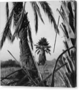 Palm In View Bw Horizontal Canvas Print