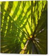 Palm Leaves And Morning Light Canvas Print